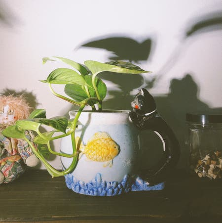 Photo of the plant species Cornus Kousa by Riley named baby pothos on Greg, the plant care app