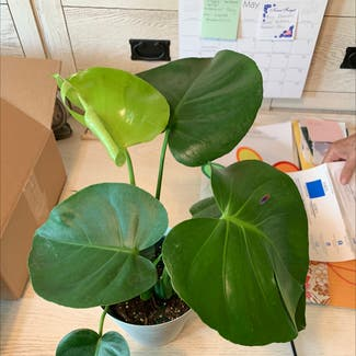 Monstera plant in Somewhere on Earth