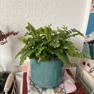 Maidenhair fern plant in Somewhere on Earth