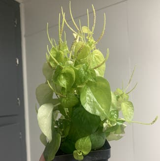 A plant in Somewhere on Earth