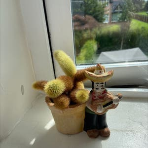 Lady Finger Cactus plant photo by Alannahoc named Signor Cactus on Greg, the plant care app.
