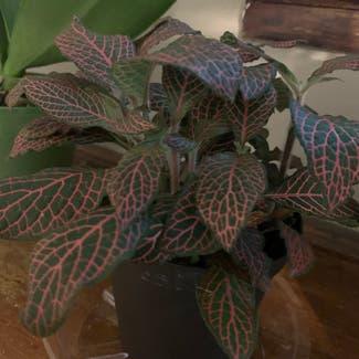 Nerve Plant plant in Columbus, Ohio