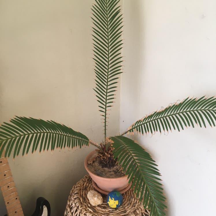 None plant in Denver, Colorado
