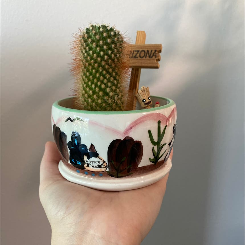 Lady Finger Cactus plant in Pompano Beach, Florida