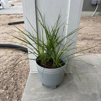A plant in Bluffdale, Utah
