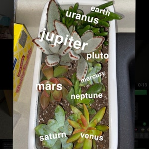 Painted Lady plant photo by Avaqsue named the milky way on Greg, the plant care app.