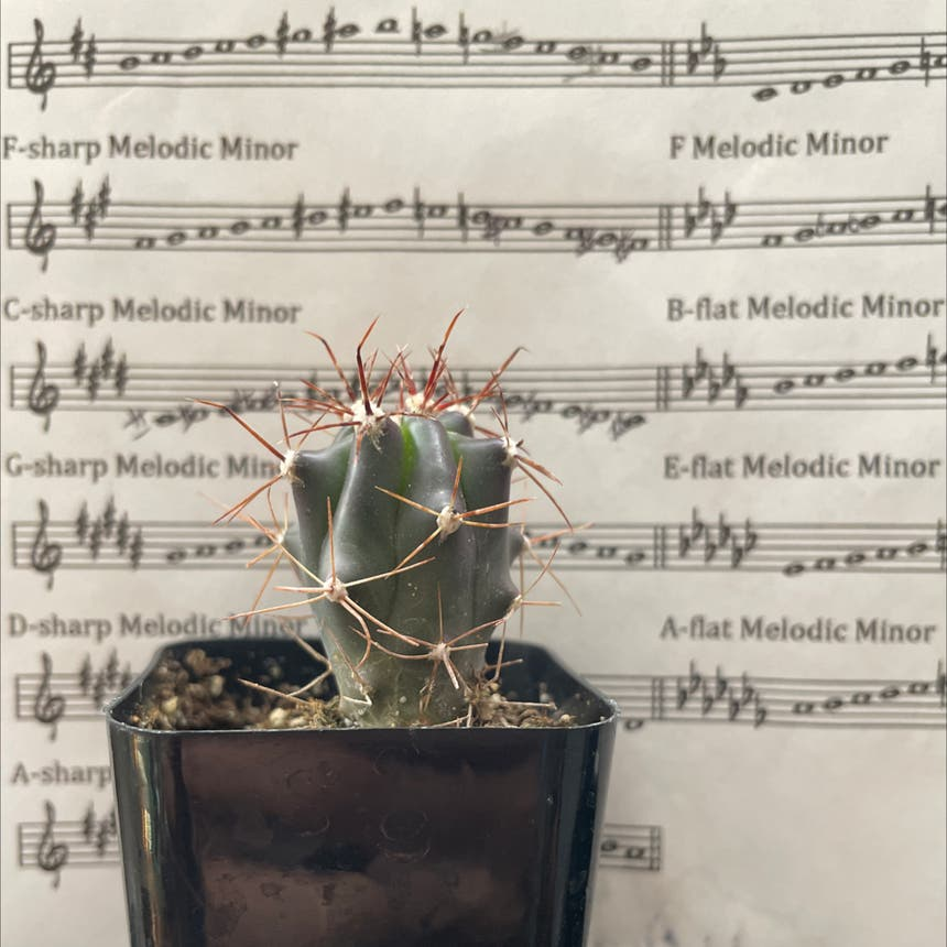 Emory's Barrel Cactus plant in Reedley, California