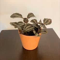 Aluminum Plant plant