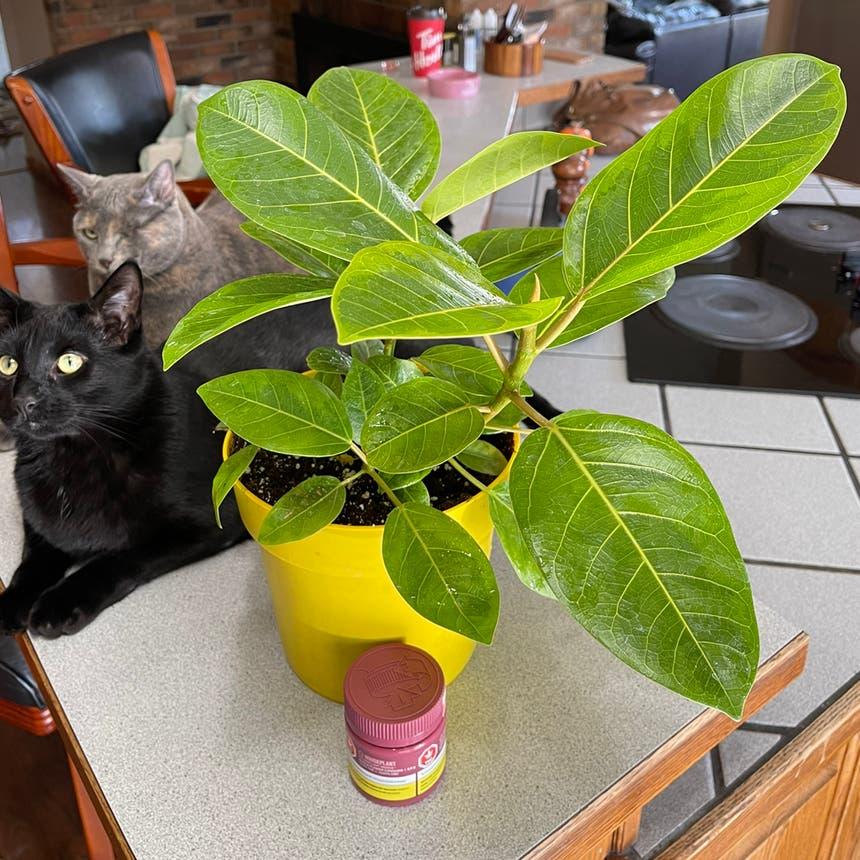 Council Tree plant in Medicine Hat, Alberta