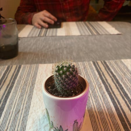 Photo of the plant species Nylon Hedgehog Cactus by The_real_shamu named Spike on Greg, the plant care app