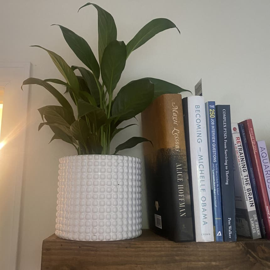 Peace Lily plant in Somewhere on Earth
