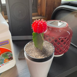 Rating of the plant Moon Cactus named Moon Sean by Papi on Greg, the plant care app