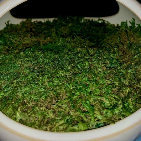 Photo of the plant species Curveleaf Plait Moss by Jessica named Crystal Garden on Greg, the plant care app