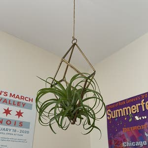 Spreading Airplant plant photo by Leahtrit named Roxy on Greg, the plant care app.