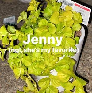 Creeping Jenny plant photo by Ice named Jenny on Greg, the plant care app.