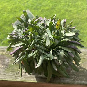 Blue bugle plant photo by Maytheplantsbewithyou named Sir Plancelot on Greg, the plant care app.