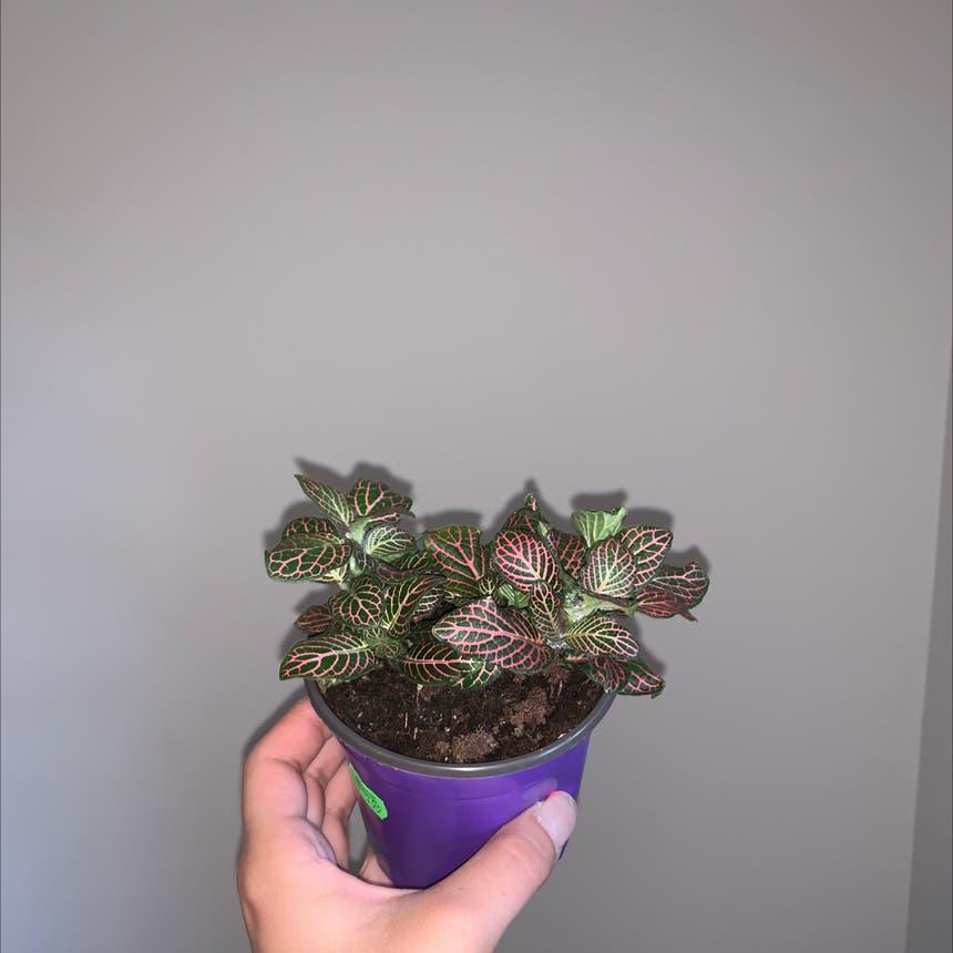 Nerve Plant plant in Mississauga, Ontario