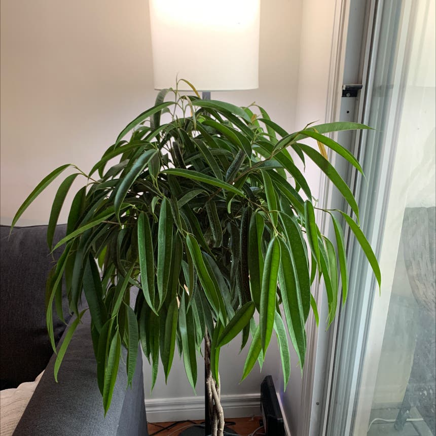 None plant in Mississauga, Ontario