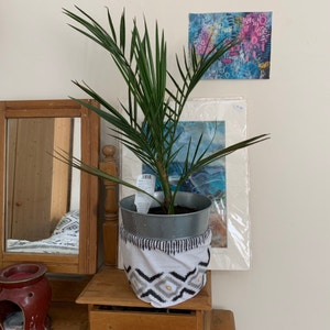 Canary Island date palm plant photo by Gfen named Petra on Greg, the plant care app.