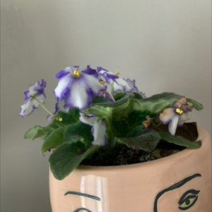 Rating of the plant African Violet named African Flower by Sara on Greg, the plant care app