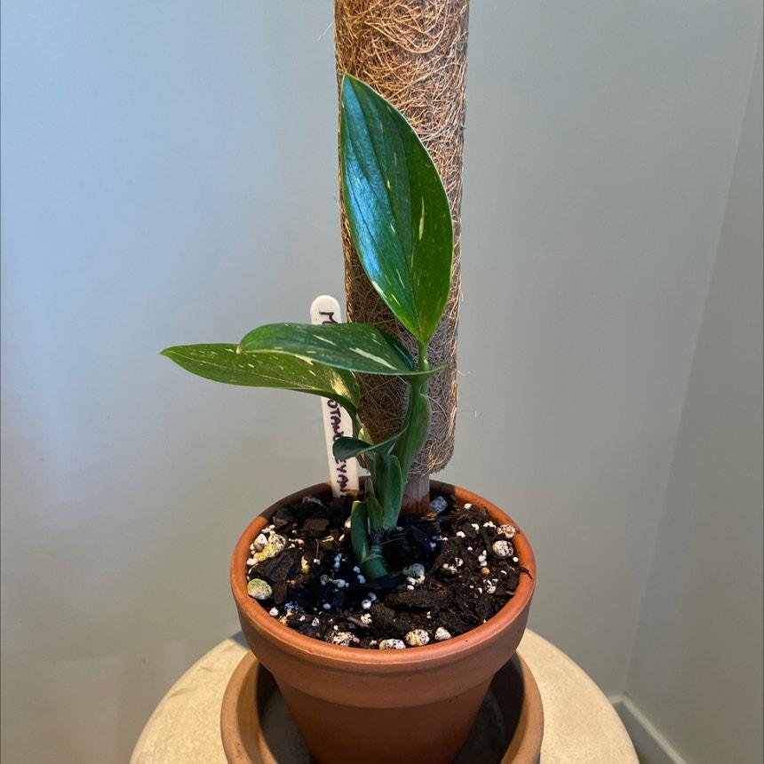 Five Holes Plant plant