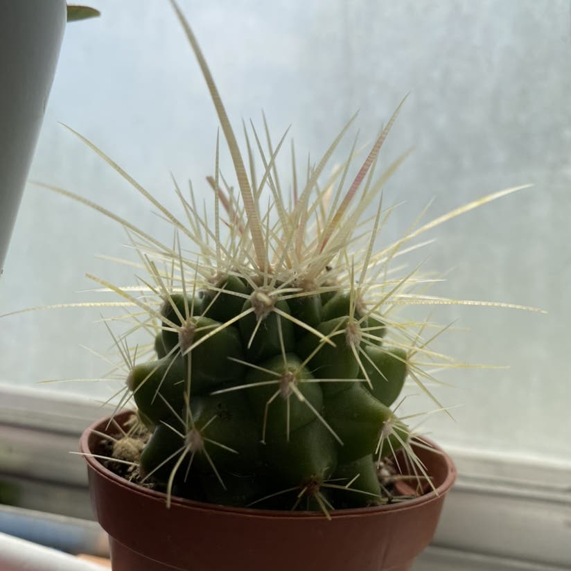 cactus plant in Stansbury Park, Utah