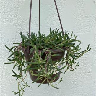 String of Pickles plant in Laredo, Texas