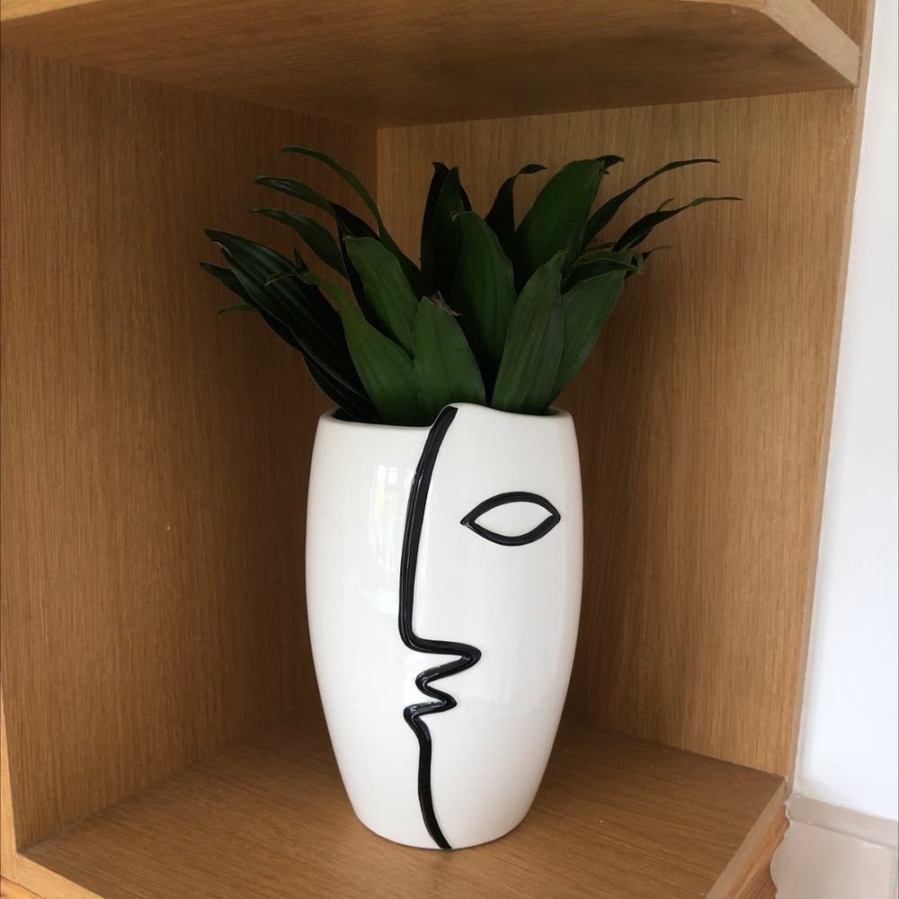 Photo of the plant species Cornstalk Dracaena by Nottodayben named Serving Face on Greg, the plant care app