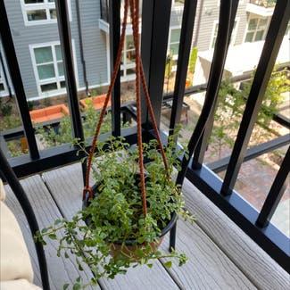 Rockweed plant in Atlanta, Georgia