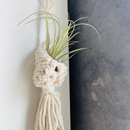 Photo of the plant species Tillandsia seideliana by Bloodandgauraa named Stella on Greg, the plant care app