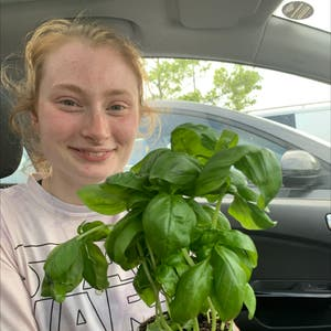 Rating of the plant Sweet Basil named Barry by Puddlesday on Greg, the plant care app