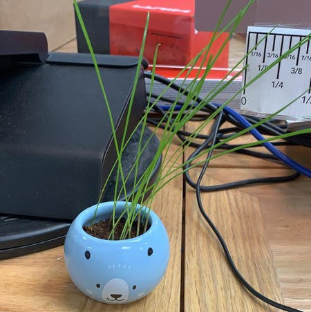 Photo of the plant species Annual ryegrass by Catattack named Freddy on Greg, the plant care app