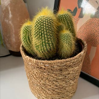 cactus plant in Costessey, England