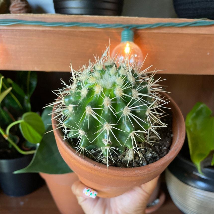 cactus plant in Oklahoma City, Oklahoma