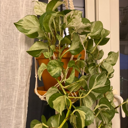 Photo of the plant species Happy leaf by Emma named Hobi on Greg, the plant care app