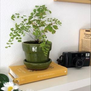 Maidenhair fern plant photo by Maddiemledford named Vladimir lenin on Greg, the plant care app.