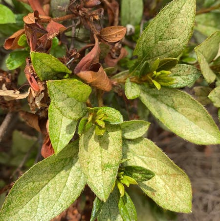 Photo of the plant species Pellitory Of The Wall by Shirley named Plato on Greg, the plant care app