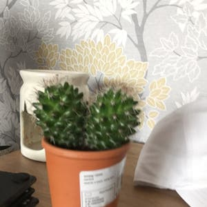 Eve's Needle Cactus plant photo by Staceakin named 2faced tina on Greg, the plant care app.