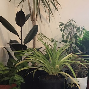 Naancy avatar on Greg, the plant care app