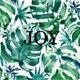 Joy.plant avatar