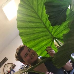 Cactusmomma avatar on Greg, the plant care app