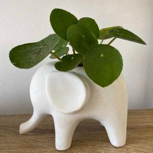 Elephantplantlover30 avatar on Greg, the plant care app