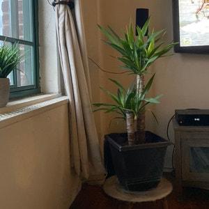 Sara avatar on Greg, the plant care app