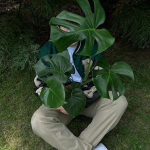 Tariqcannings avatar on Greg, the plant care app