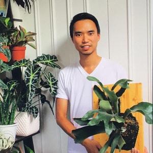 Houseplantjournal avatar