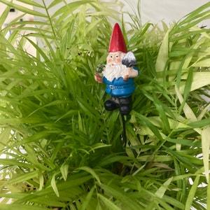Avatar for Rednerite on Greg, the plant care app